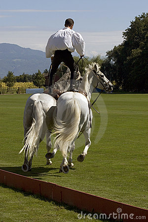 Stuntman on horses (3392)