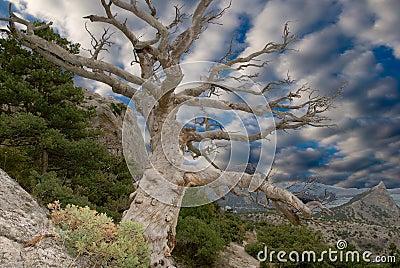 Sturdy dry tree