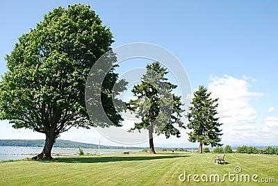 Sturdy Trees