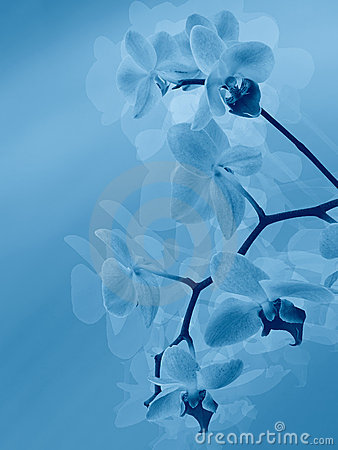 Free Styled Orchid Stock Photo - 9450590