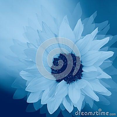Free Styled Sunflower Stock Photo - 9363080