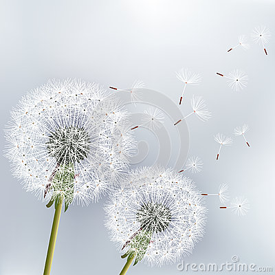 Free Stylish Floral Background With Two Flowers Dandeli Stock Photo - 34704140