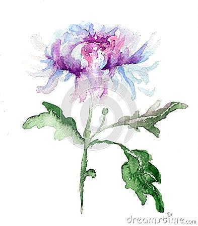 Stylized Chrysanthemum flower illustration