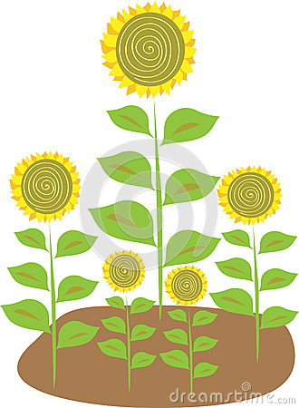 Stylized illustration of five sunflowers
