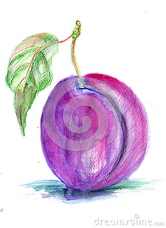 Stylized illustration of plum