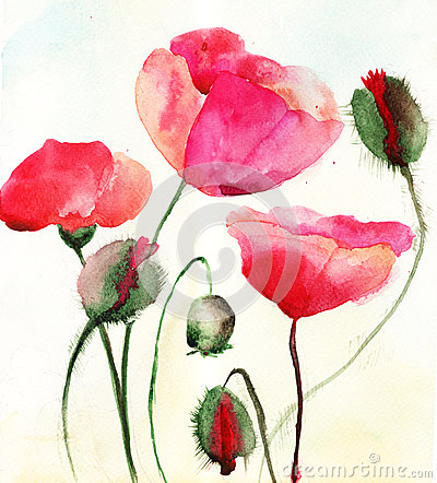 Stylized Poppy flowers illustration