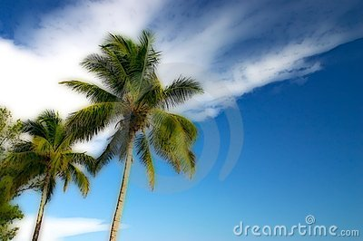 Stylized Two Palm trees and a blue sky