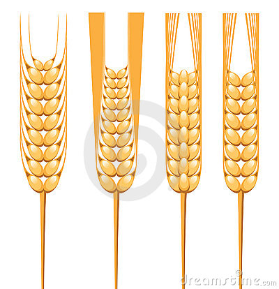 Stylized wheat ears