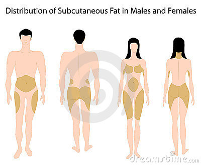 Subcutaneous fat in human