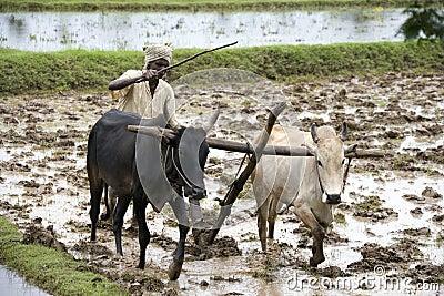 Subsistence Farmer - Tamil Nadu - India Editorial Photo