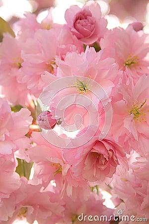 Subtle blossom
