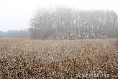 Subtle colors of marsh grasses in late autumn mist
