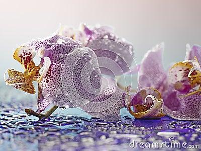 Subtle petals