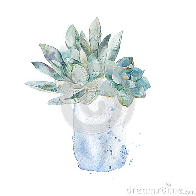 Free Succulent Home Plant. Stock Photography - 68633622