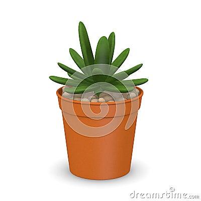 Succulent plant in pot