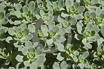 Succulents in Andalusia III