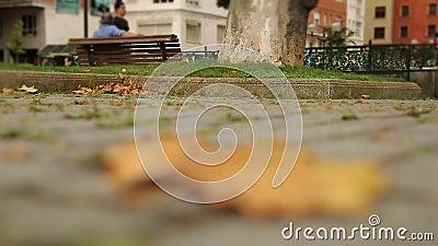 Suchy liścia klonowego lying on the beach na brukującym chodniczku, jesień w dużym mieście, osamotniony starzenie, czas zdjęcie wideo
