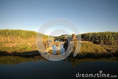 Sugar Cane Farm and Irrigation