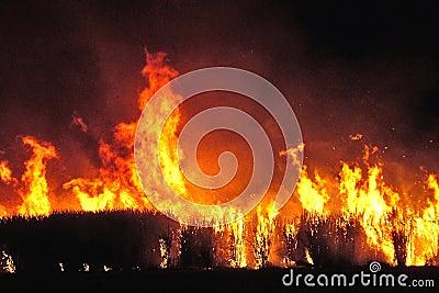 Sugar cane fire