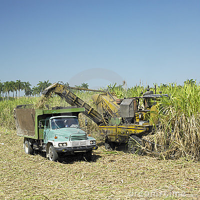 Free Sugar Cane Harvest Stock Photo - 17019020