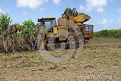 Sugar Cane Harvest by Machine