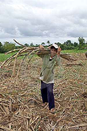 Sugar cane worker Editorial Image
