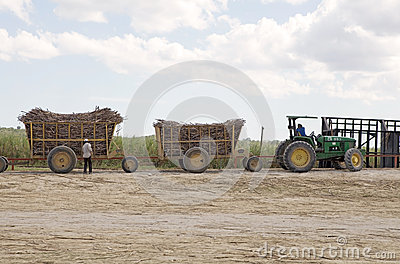 Sugarcane transportation Editorial Image
