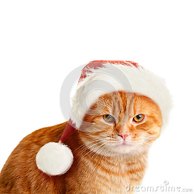 Free Sullen Cat In Santa Hat On White Background Royalty Free Stock Photography - 63109347