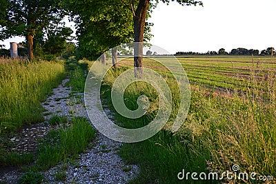 Summer agriculture landscape