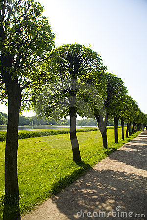 Free Summer Alley Royalty Free Stock Image - 3859836
