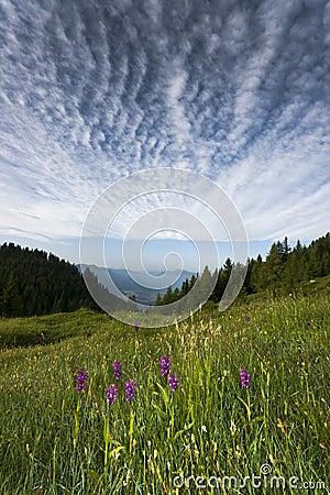 Summer Austria Alps