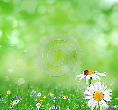 Free Summer Background Royalty Free Stock Photos - 32684098