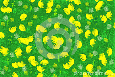 Summer background with camomiles.