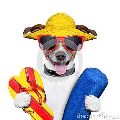 Free Summer Beach Dog Royalty Free Stock Photography - 30907617