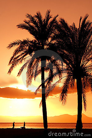 Free Summer Beach Vacation Palm Tree Royalty Free Stock Photography - 4020377