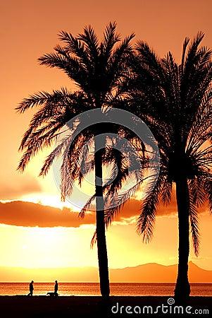 Summer beach vacation palm tree