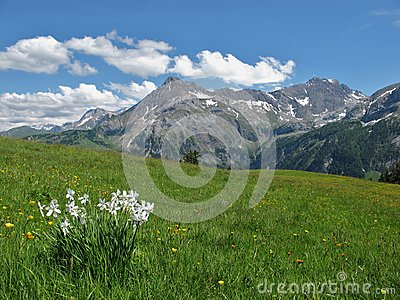 Summer in the Bernese Oberland