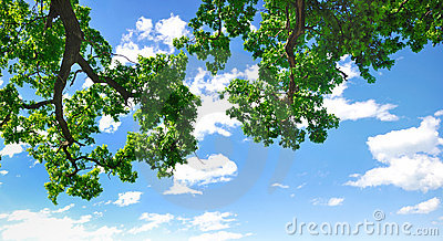 Summer branch with blue sky and clouds
