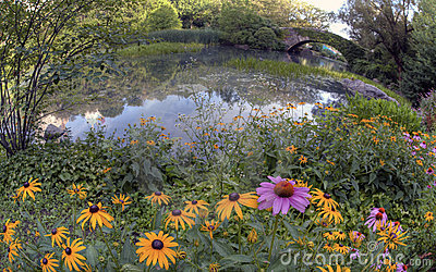 Summer in central park by the pond with flowers at the gapstow bridge