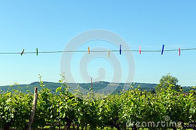Summer clothes line