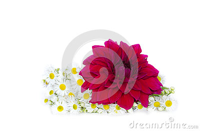 Summer daisies and red flower