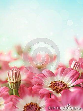 Free Summer Daisy Flower Royalty Free Stock Photo - 23448445