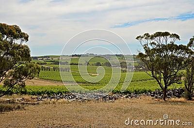 A summer day at a vineyard in McLaren Vale