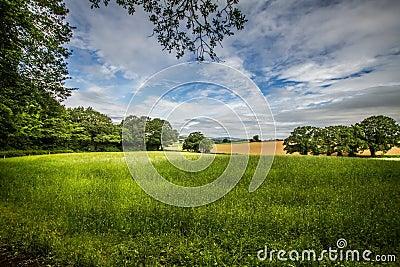 Summer in England