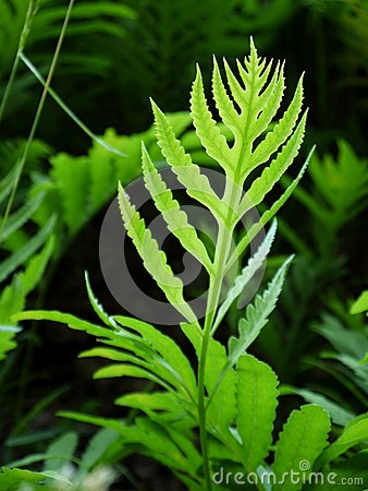Summer: evening sunlit fern leaf