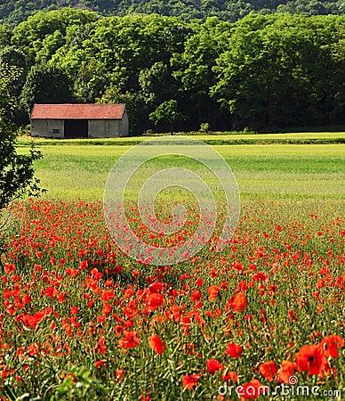 Summer farm season