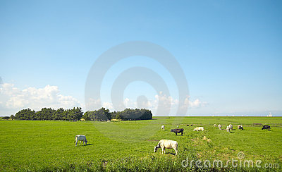 Summer farmland