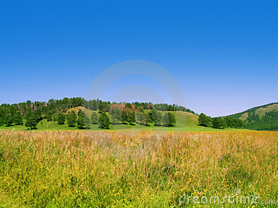 Summer field with trees on the hill