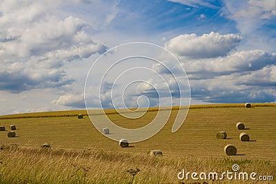 Summer fields , Cambridgeshire
