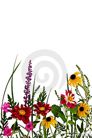 Free Summer Flowers Royalty Free Stock Photography - 3143087